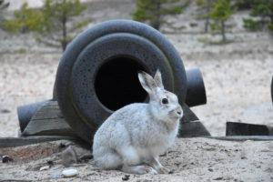 9_hare
