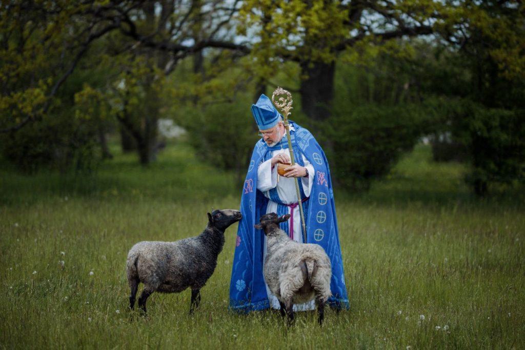 Porträtt av biskop Thomas Petersson, fotad av Jessica Lindgren-Wu på uppdrag av Visby stift, Svenska kyrkan, tillsammans med lamm i ett Gotlandsänge våren 2020.